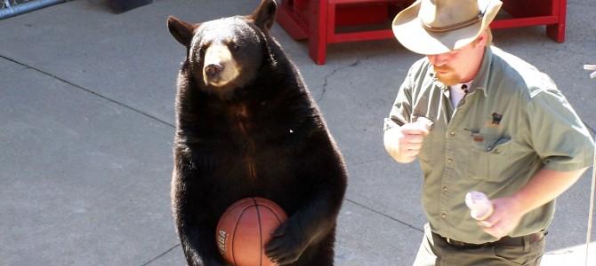 Clark's Trained Bears